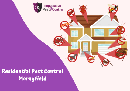 Residential Pest Control Services