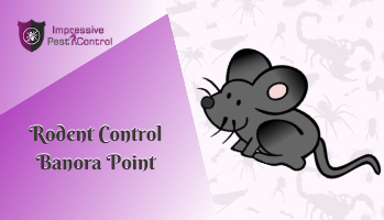 Rodent Control Banora Point
