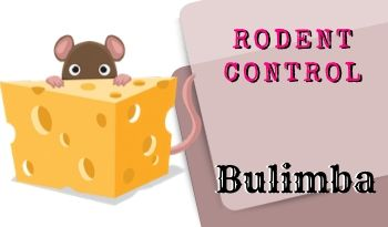 Rodent control Bulimba