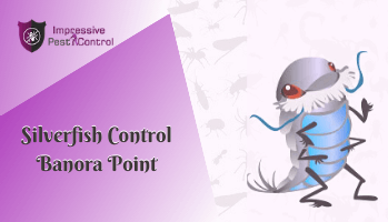 Silverfish Control Banora Point