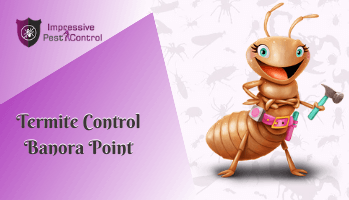 Termite Control Banora Point