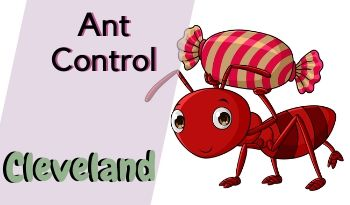 ant-control-Cleveland