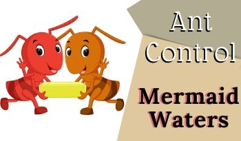 ant-control-Mermaid Waters