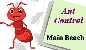 ant-control-Main Beach
