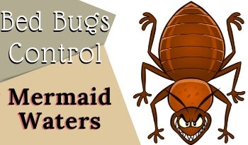 bed bugs control Mermaid Waters