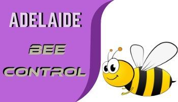 bee control adelaide