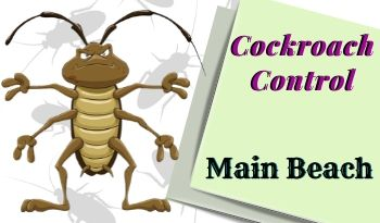 cockroach-control-Main Beach