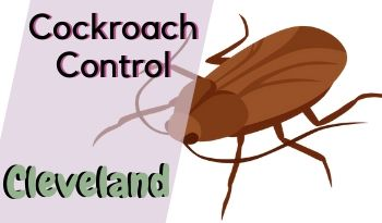 cockroach-control-Cleveland