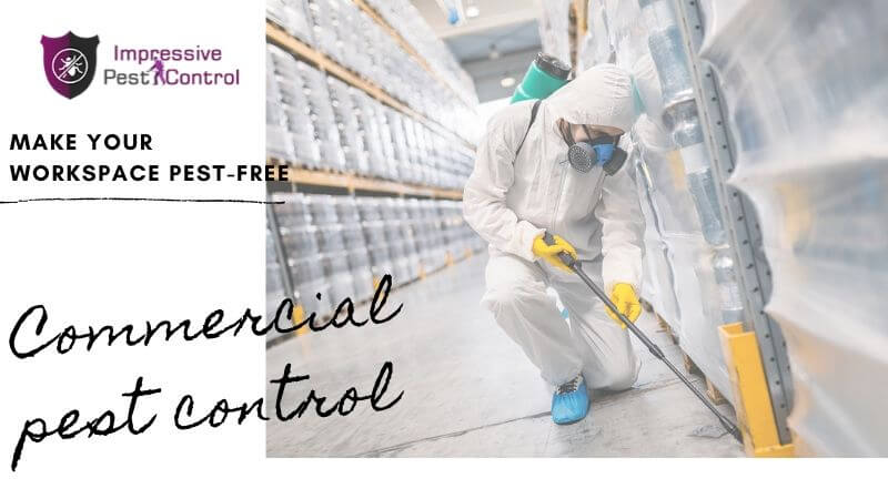 Commercial Pest Control Clayfield