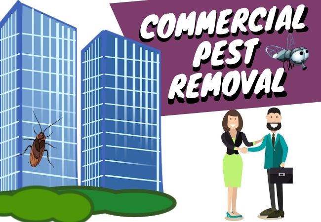 commercial-pest-treatment