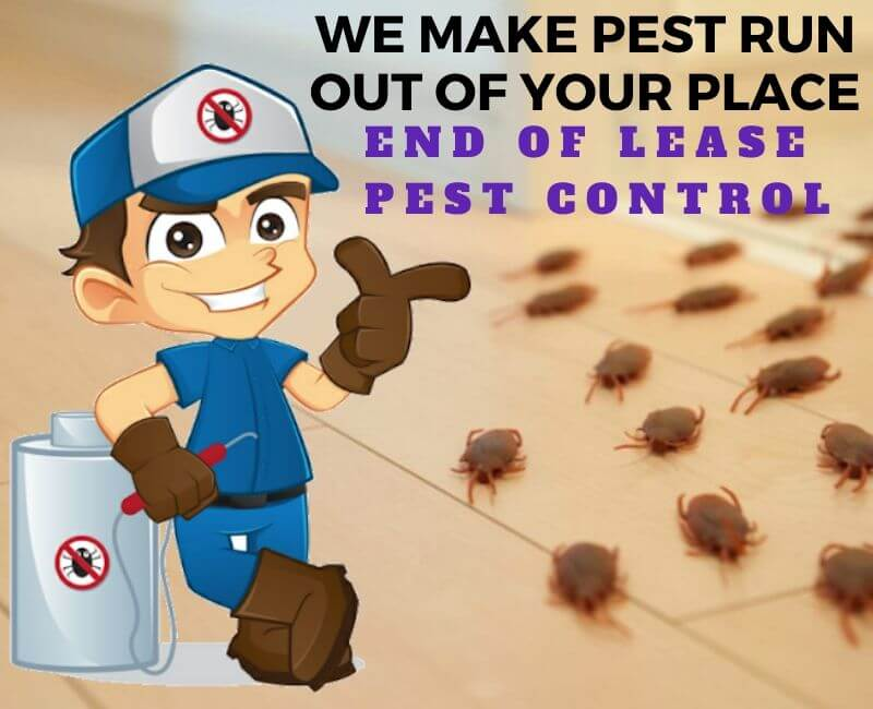 End of Lease Pest Problem