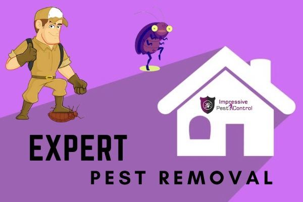 expert pest removal