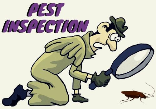 pest-inspection