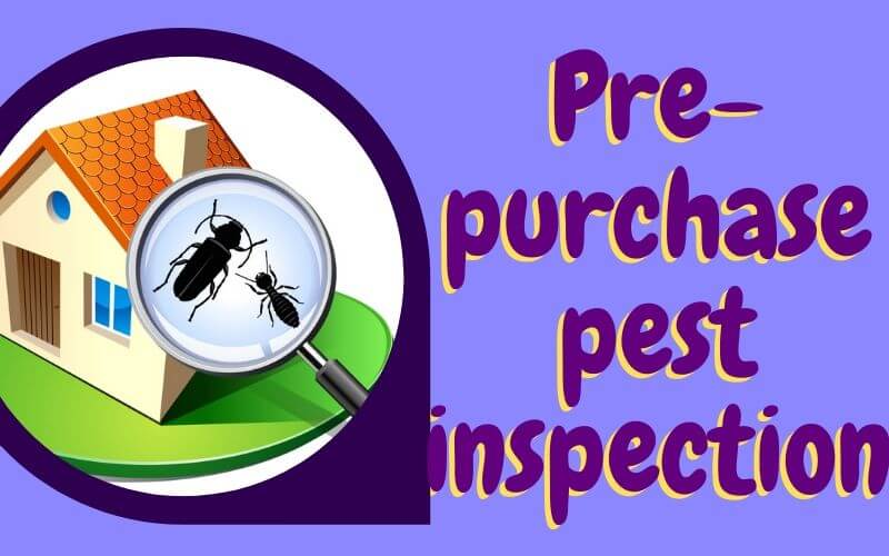 Pre-purchase pest inspection