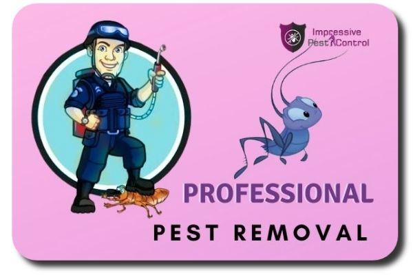 professional pest removal service