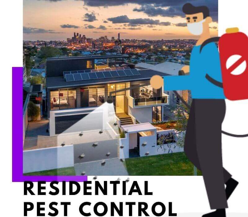 Residential Pest Control Clayfield