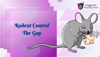 Rodent Control The Gap