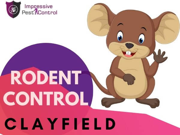 Rodent control Clayfield
