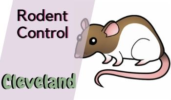 Rodent control Cleveland