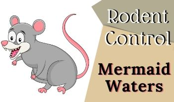 Rodent control Mermaid Waters