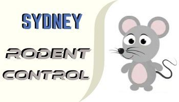 rodent control sydney