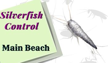 silverfish control Main Beach