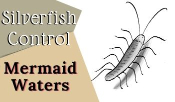 silverfish control Mermaid Waters