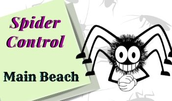 spider-control-Main Beach