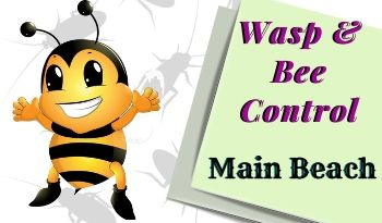 bees-control-Main Beach