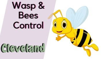 bees-control-Cleveland