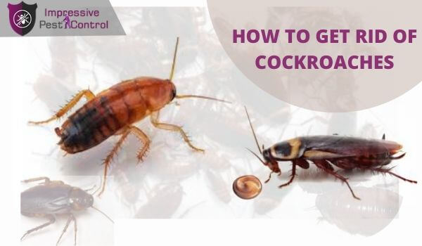 Best Way To Get Rid Of Cockroaches