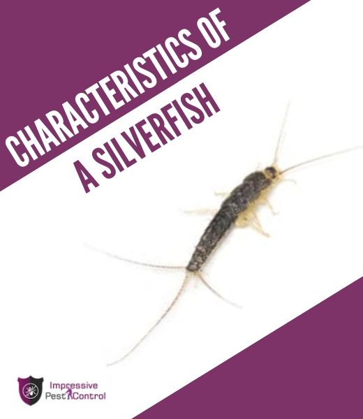 characteristics of silverfish