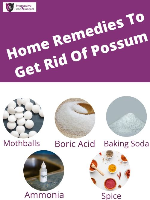 Home Remedies To Get Rid Of Possum