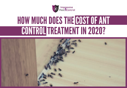 How Much Does the Cost of Ant Control Treatment in 2020