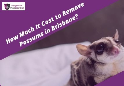 Cost to Remove Possums in Brisbane?