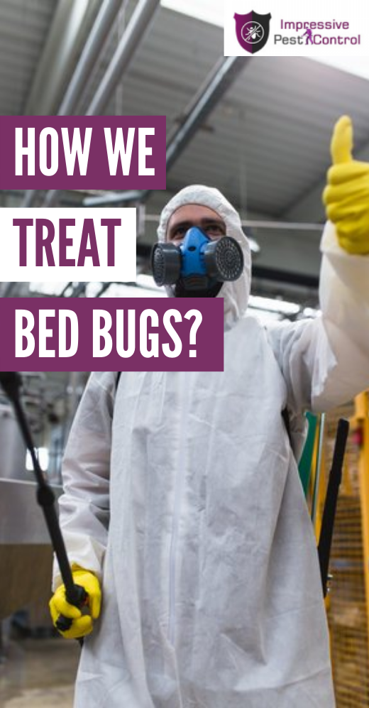 how we treat bed bugs