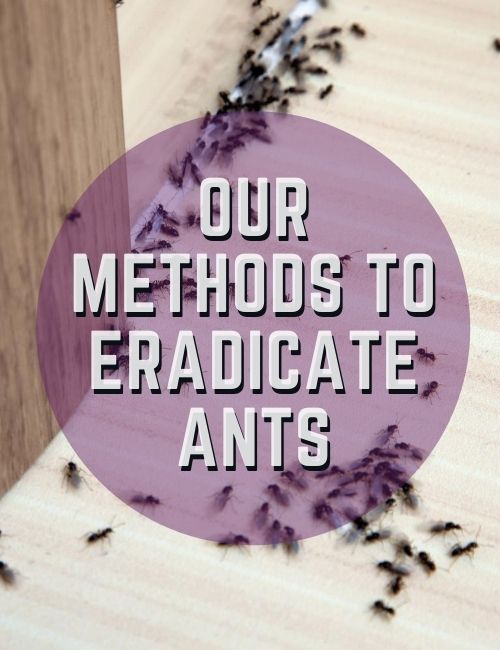 Our Procedure to Exterminate Ants