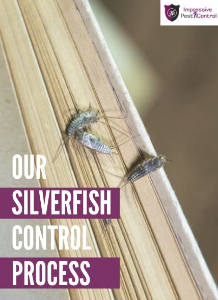 process of silverfish control Brisbane