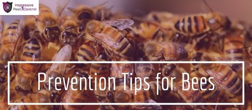 prevention tips for bees