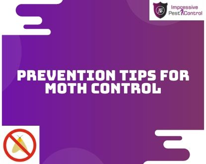 Prevention Tips for Moth Control brisbane