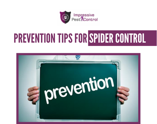 Prevention Tips for Spider Control