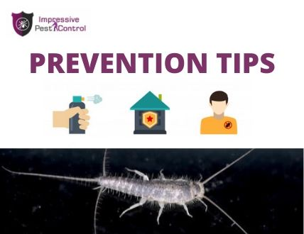preventive tips to remove silverfish