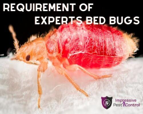 experts bed bugs control melbourne