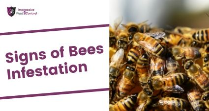 signs of bees infestation