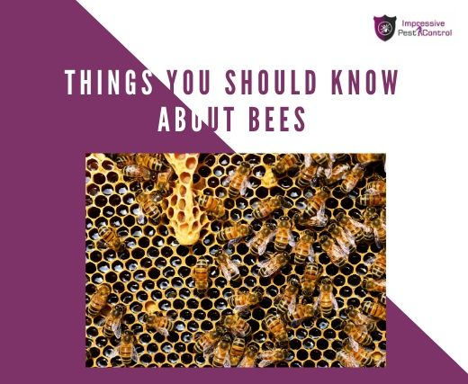 things you should know about bees