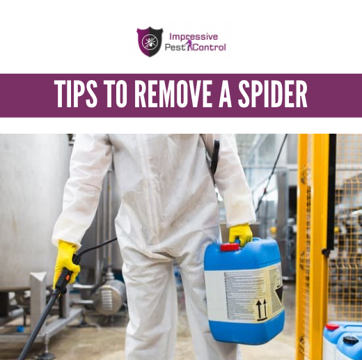 Tips to Remove a Spider