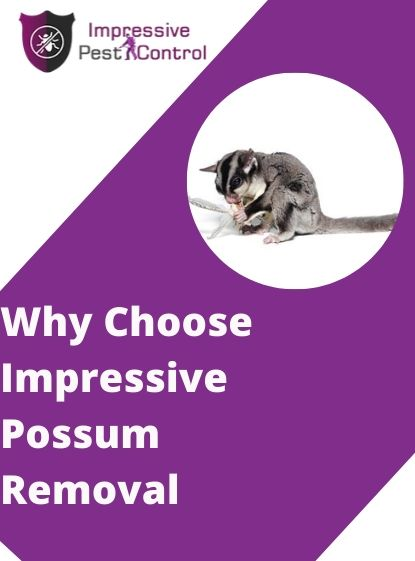 Why choose Impressive Possum Removal