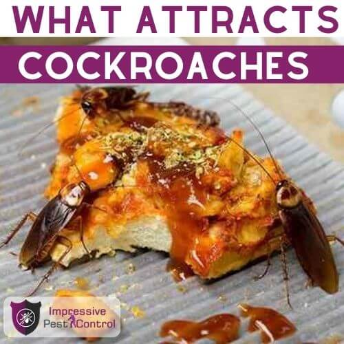 what attracts cockroaches
