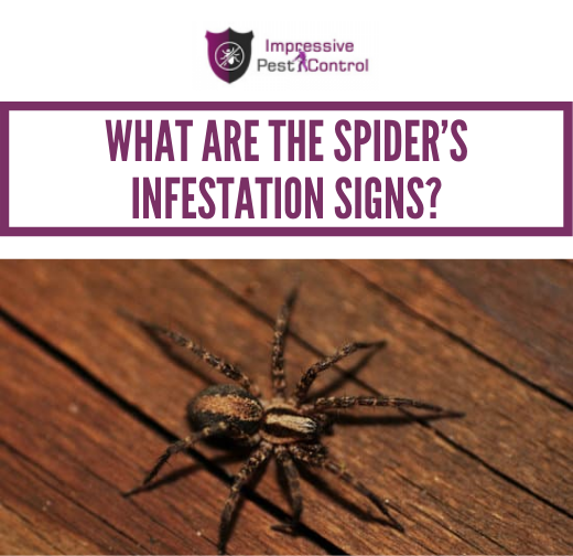 What are the Spider's Infestation Signs?