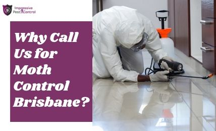 Why hire us for Moth Control Brisbane
